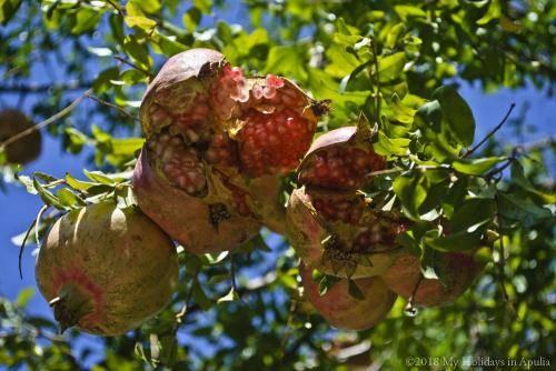 autumn in apulia